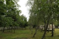 unter-den-birken_006