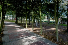 unter-den-birken_073